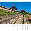 Rebstöcke an der Esslinger Burg